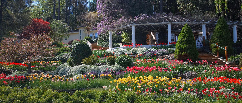 Springtime at Ananda - Tulip Festival